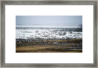 Framed Print featuring the photograph Crane Dance by Torbjorn Swenelius