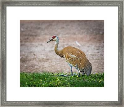 Framed Print featuring the photograph Crane Down by Bill Pevlor
