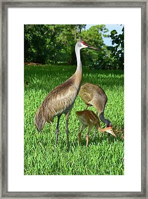 Crane Family Picnic Framed Print