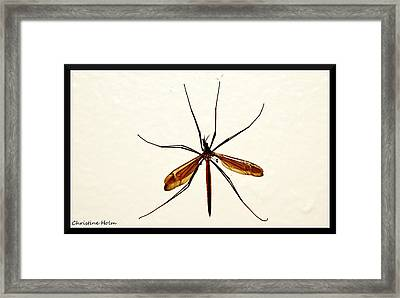 Crane Fly Framed Print by Christine Holm