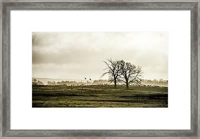 Crane Hill Framed Print by Torbjorn Swenelius