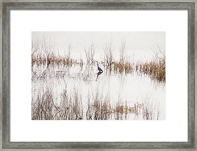 Framed Print featuring the photograph Crane In Reeds by Laura Pratt