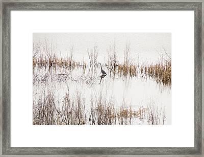 Crane In Reeds Framed Print