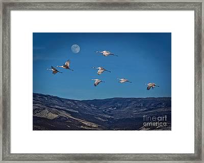 Cranes Across Colorado Blue Framed Print by Janice Rae Pariza