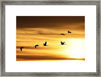 Framed Print featuring the photograph Cranes At Sunrise 2 by Larry Ricker