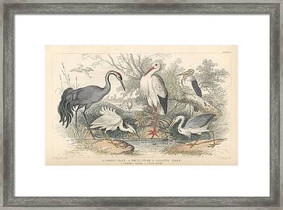 Cranes Framed Print by Rob Dreyer