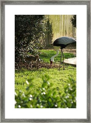 Cranes Framed Print by Tina McKay-Brown