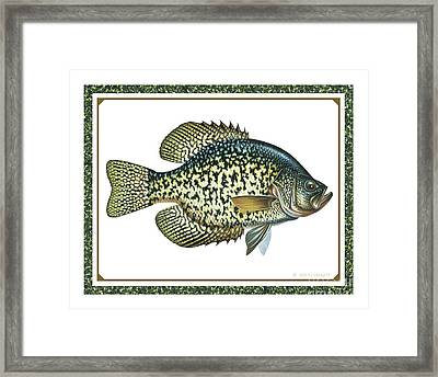 Crappie Print Framed Print by JQ Licensing