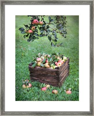 Crate Of Apples Framed Print by Lori Deiter