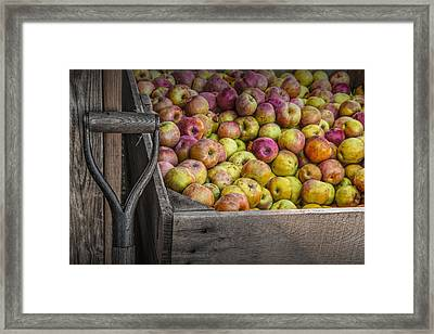 Crated Apples At The Cider Press Framed Print by Randall Nyhof