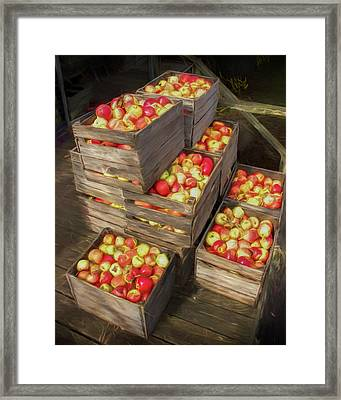 Crated Apples Waiting For The Cider Press Painterly Version Framed Print by Randall Nyhof