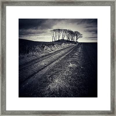 Crawton Trees Framed Print by Dave Bowman