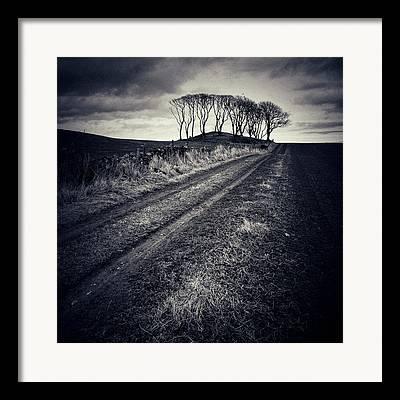Copse Of Trees Framed Prints