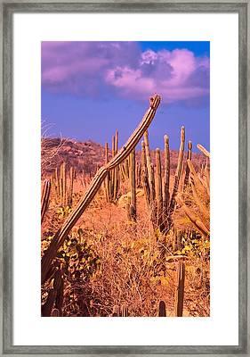 Crazy Cacti Framed Print by Janal Koenig