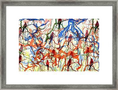 Crazy Cardinals Framed Print
