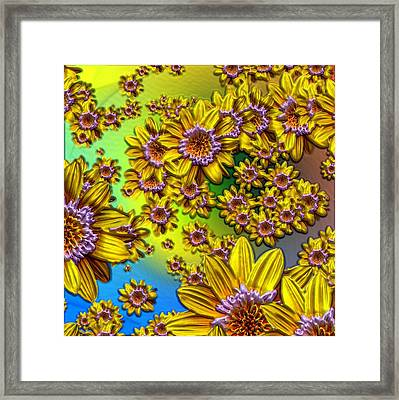 Crazy Daisies Framed Print by Nick Kloepping