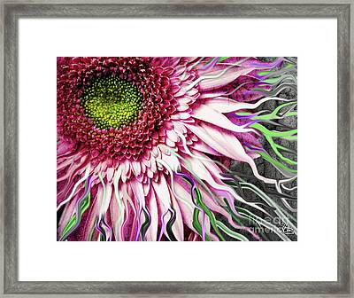 Crazy Daisy Framed Print
