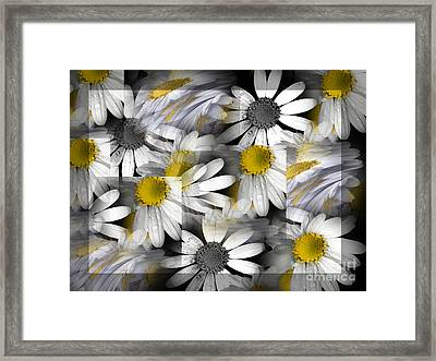 Crazy Daisys Framed Print