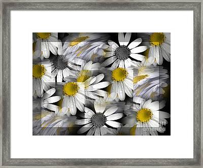 Crazy Daisys Framed Print by Karen Lewis