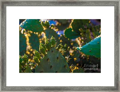 Crazy Fingers 2 Framed Print by J Darrell Hutto