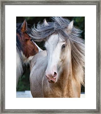 Framed Print featuring the photograph Crazy Hair by Sharon Jones