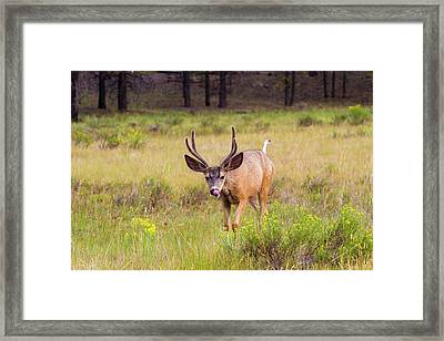 Crazy Tongue   Framed Print by James Marvin Phelps