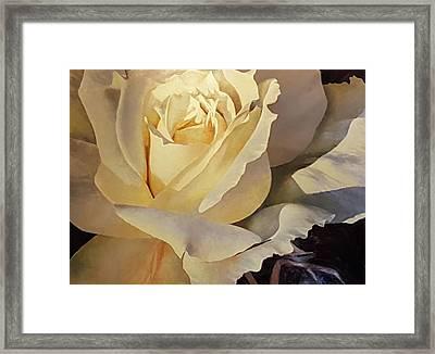 Creamy Rose Framed Print