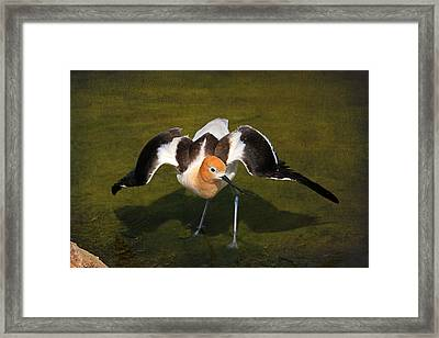 Creating A Diversion Framed Print by Donna Kennedy