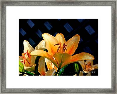 Creation-2 Framed Print by Robert Pearson
