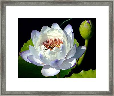 Framed Print featuring the photograph Creation by Brenda Pressnall