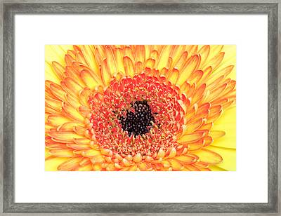 Creation Of A Masterpiece Framed Print by Pierre Leclerc Photography