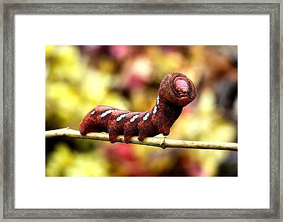 Creature Feature Framed Print by Karen M Scovill