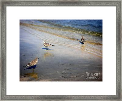 Creatures Of The Gulf - Which Way Framed Print by Lucyna A M Green