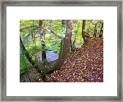 Creek Bank Framed Print by Linda Carruth