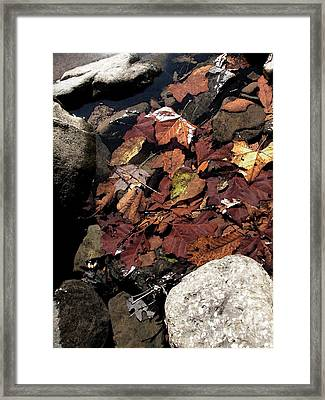 Creek Bottom At Richland Creek Framed Print by Steve Grisham