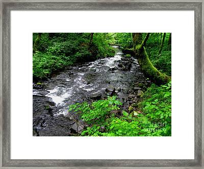 Creek Flow Framed Print by PJ  Cloud