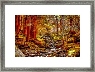 Creek In The Forest L B Framed Print