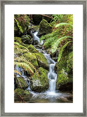 Creek In The Forest Framed Print