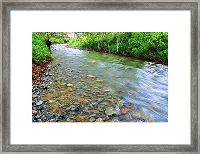 Creek Of Many Colors Framed Print by Donna Blackhall