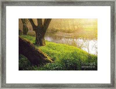 Creek Shore  Framed Print by Carlos Caetano