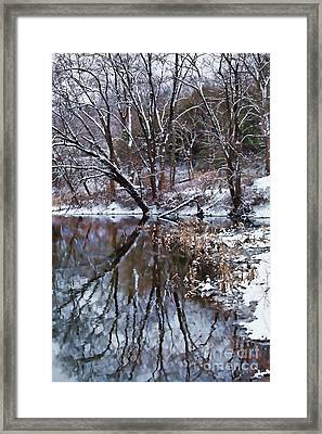 Creekside Framed Print by Nicki McManus