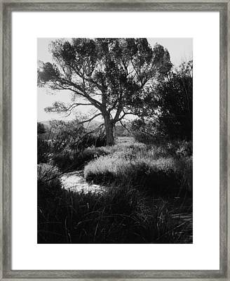 Creekside Summer Framed Print