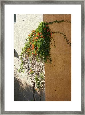 Creeping Plants Framed Print