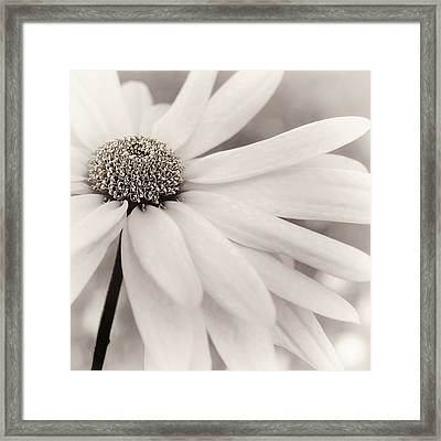 Framed Print featuring the photograph Creme Fraiche In Black And White by Darlene Kwiatkowski