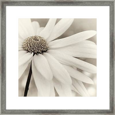 Framed Print featuring the photograph Creme Fraiche In Gold And White by Darlene Kwiatkowski