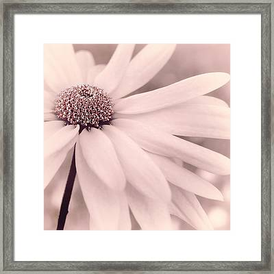 Framed Print featuring the photograph Creme Fraiche With Hint Of Pink by Darlene Kwiatkowski