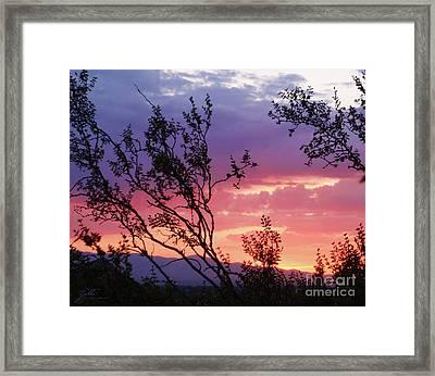 Creosote Sky Framed Print