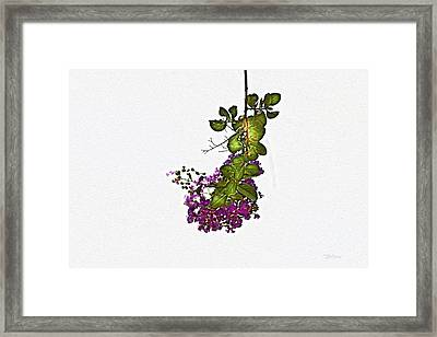 Crepe Myrtle In Oil Framed Print