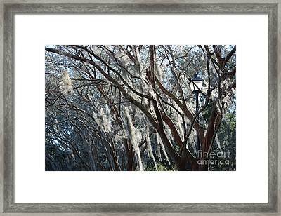 Crepe Myrtles In Winter With Lamppost Framed Print
