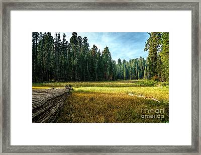 Crescent Meadows Sequoia Np Framed Print